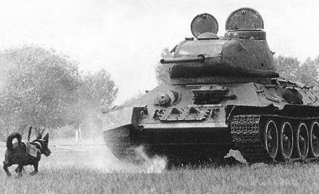 perros antitanque soviéticos